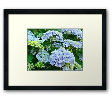 Blue Hydrangea Flowers Green Garden art Baslee Troutman Framed Print