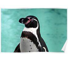 Penguin Portrait Poster