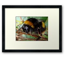 In Your Face! Framed Print