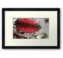 Brush Tree Framed Print
