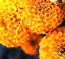 Marigolds by littlewings