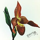Red Slipper Orchid by debbiemc