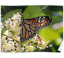 Sharing nectar! Poster