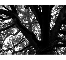 Ghostly Forest Photographic Print