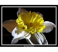 Jonquil / Daffodil #2 Photographic Print