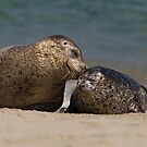 Sealed with a Kiss by Kathy Cline