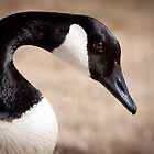 Canadian Goose Profile by Zunazet