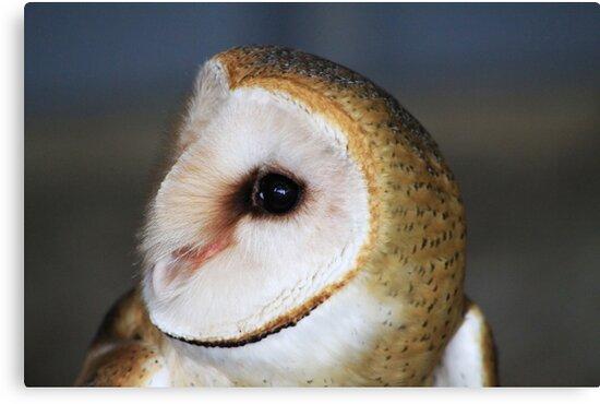 "Barn Owl - ""Casper"" by Alyce Taylor"