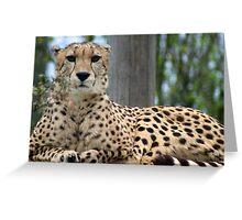 Restful Cheetah Greeting Card