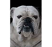Mad Max - Cute Bulldog with grumpy face Photographic Print