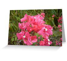 Flamongo Red Flowers Greeting Card