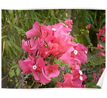 Flamongo Red Flowers Poster