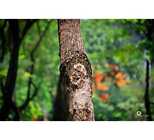 Tree portrait  Photographic Print