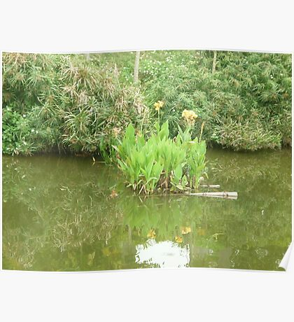 Tall beautiful yellow flowers dancing in a calm lake Poster