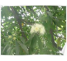 Tiny puffy flowers exploding through trees Poster