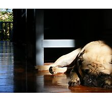 Asleep On A Sunbeam Photographic Print