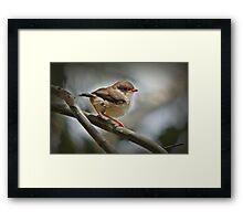 Baby Wren Framed Print