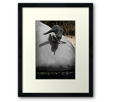 Wings Were Made to Fly. Framed Print
