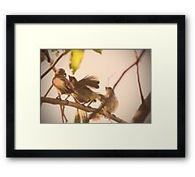 birds outside my window Framed Print