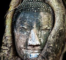 Buddha Head in Tree by Adrian Evans