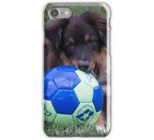 Australian Shepherd Pup iPhone Case/Skin