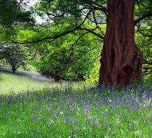 Bluebell meadow by Paul Davis
