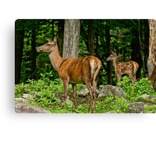 Red Deer Doe And Fawn Canvas Print