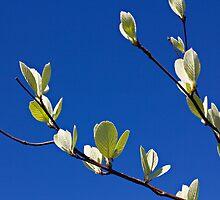 Embracing Spring by Jayne Le Mee