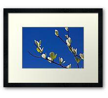 Embracing Spring Framed Print