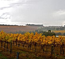 Late Autumn Vineyard by pennyswork