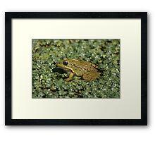 Frog 2784 Framed Print