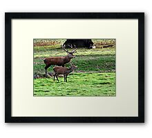 Alone Together at Last  (Red Deer) Framed Print