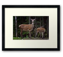 Red Deer Doe And Fawn Framed Print