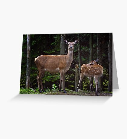 Red Deer Doe And Fawn Greeting Card