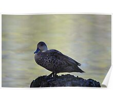 Cute little duck perched on a log Poster