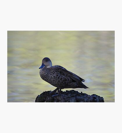 Little duck perched on a log Photographic Print