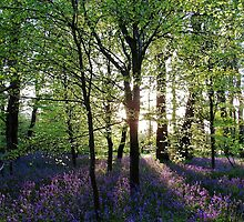 Bluebell Woodland 2010 (2) by Neil Cox