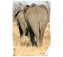 """He's not heavy, he's my brother"" - African elephant - Kruger National park Poster"