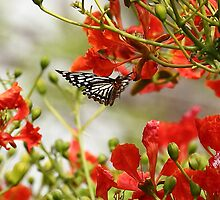 A butterfly amidst mayflower. by debjyotinayak