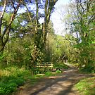 A Bridge Too Far in Upton Woods by Songwriter