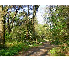 A Bridge Too Far in Upton Woods Photographic Print