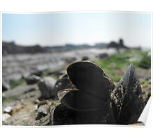 Mussels in the foreground Poster