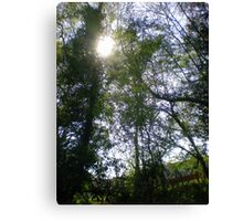 Sun Dance in the Treetops Canvas Print