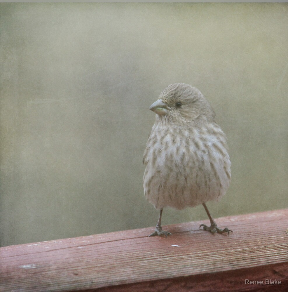 A Little Birdy Told Me by Renee Blake