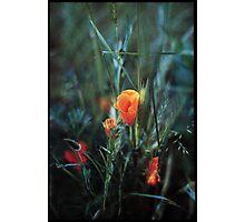 Pops Photographic Print