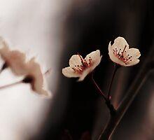 Blossoms by KatsEyePhoto