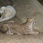 Cheetah and Dog by Karen Checca