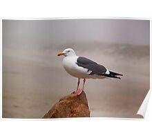 Seagull at Morro Bay Poster