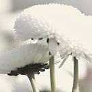 innocent flowers by xxnatbxx