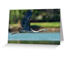 Great Blue Heron Fully Extended Greeting Card